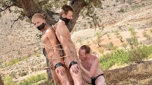 2 Young Captive Cocks To Use